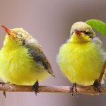kuş türleri