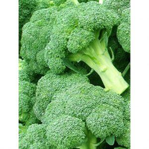 + 20 Adet Brokoli Tohumu + Sürpriz Hediye Tohum