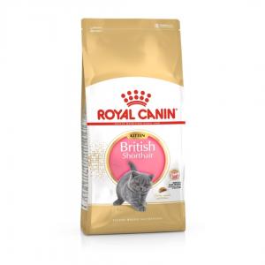 Royal Canin British Shorthair Kitten 2 Kg Yavru Kuru Kedi Maması